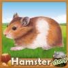 Dreamzer - HamsterStory rodent breeder