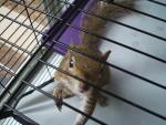rico - Male Squirrel (11 months)