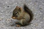 Fleur - Squirrel (2 months)