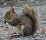 Emily - Squirrel (4 months)