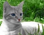Silver - Cat (2 months)