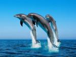 image - Dolphin