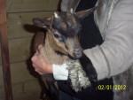 Sonia - Goat (3 months)