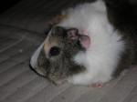 Romy (décédée le 01/07/2011) -