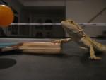 Léo - Male Turtle (2 years)